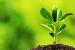 Seedling & Plants
